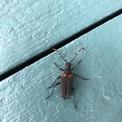 Belle insecte
