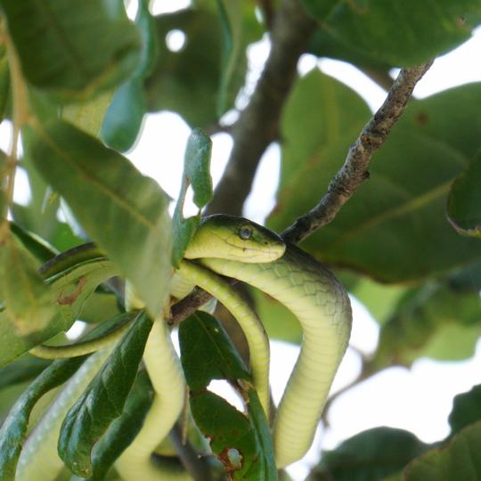 Pea Island National Wildlife Refuge