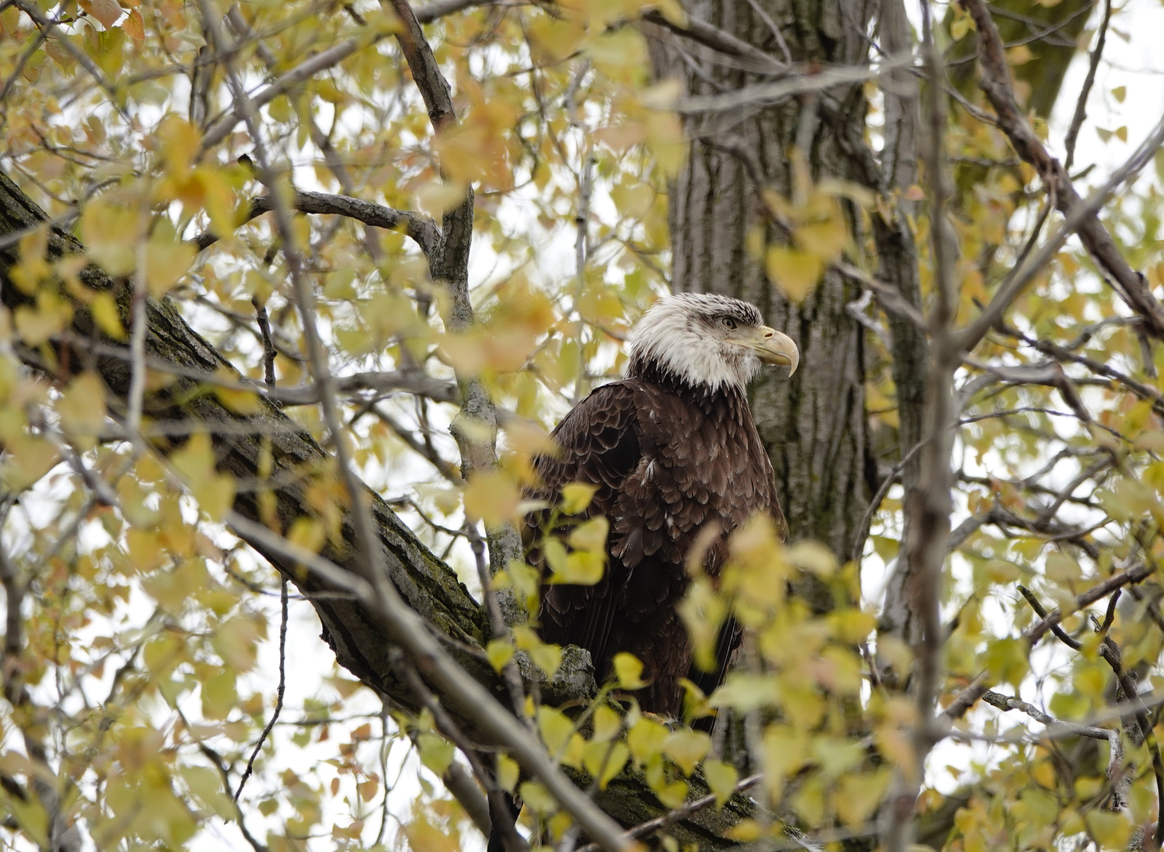 Ottawa National Wildlife Refuge