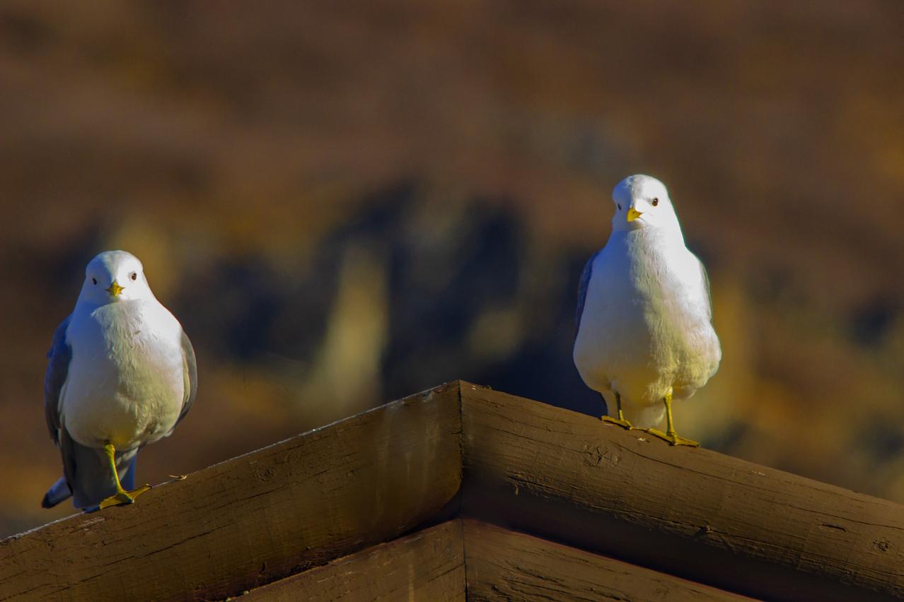 Denali National Park & Preserve