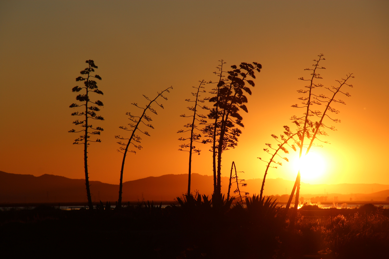 San Pablo Bay National Wildlife Refuge