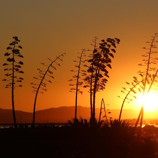 San Pablo Bay National Wildlife Refuge