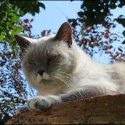 Chat et ciel bleu