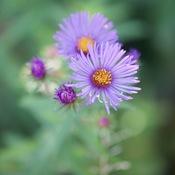 Fleurs automnales