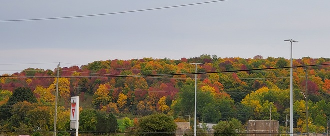 Colorful Fall Campbellford, ON