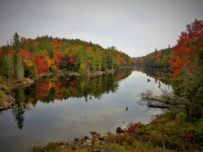 Beauty of Fall Hits Algonquin Algonquin Provincial Park - East Gate, Whitney, ON