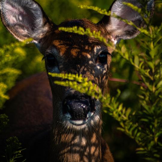 Sachuest National Wildlife Refuge