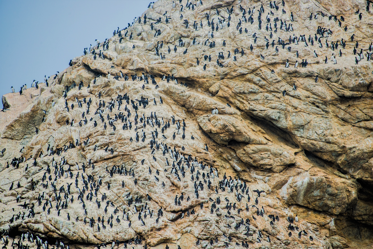Farallon Islands National Wildlife Refuge