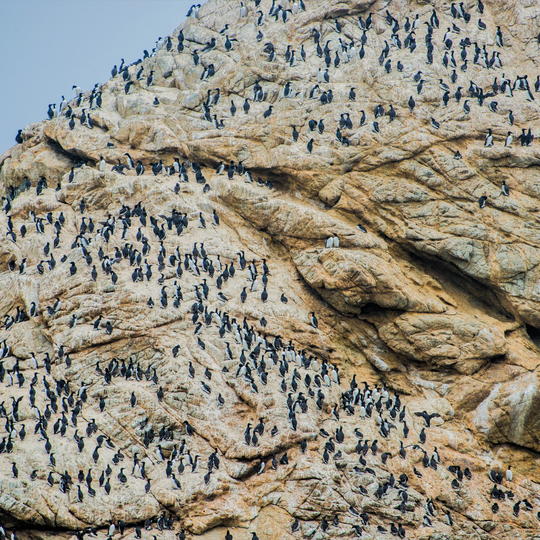 Farallon Islands National Wildlife Refuge