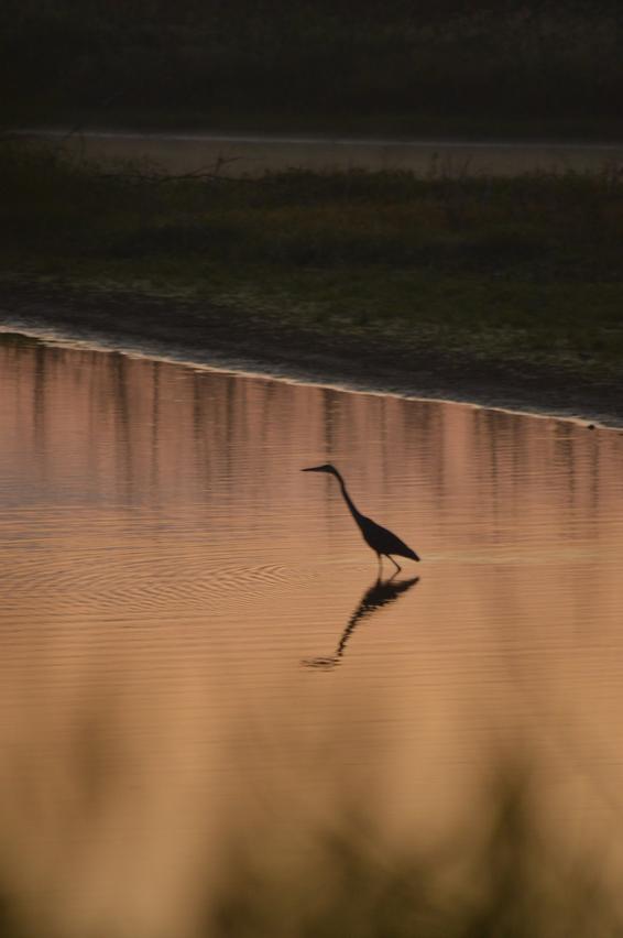 DeSoto National Wildlife Refuge