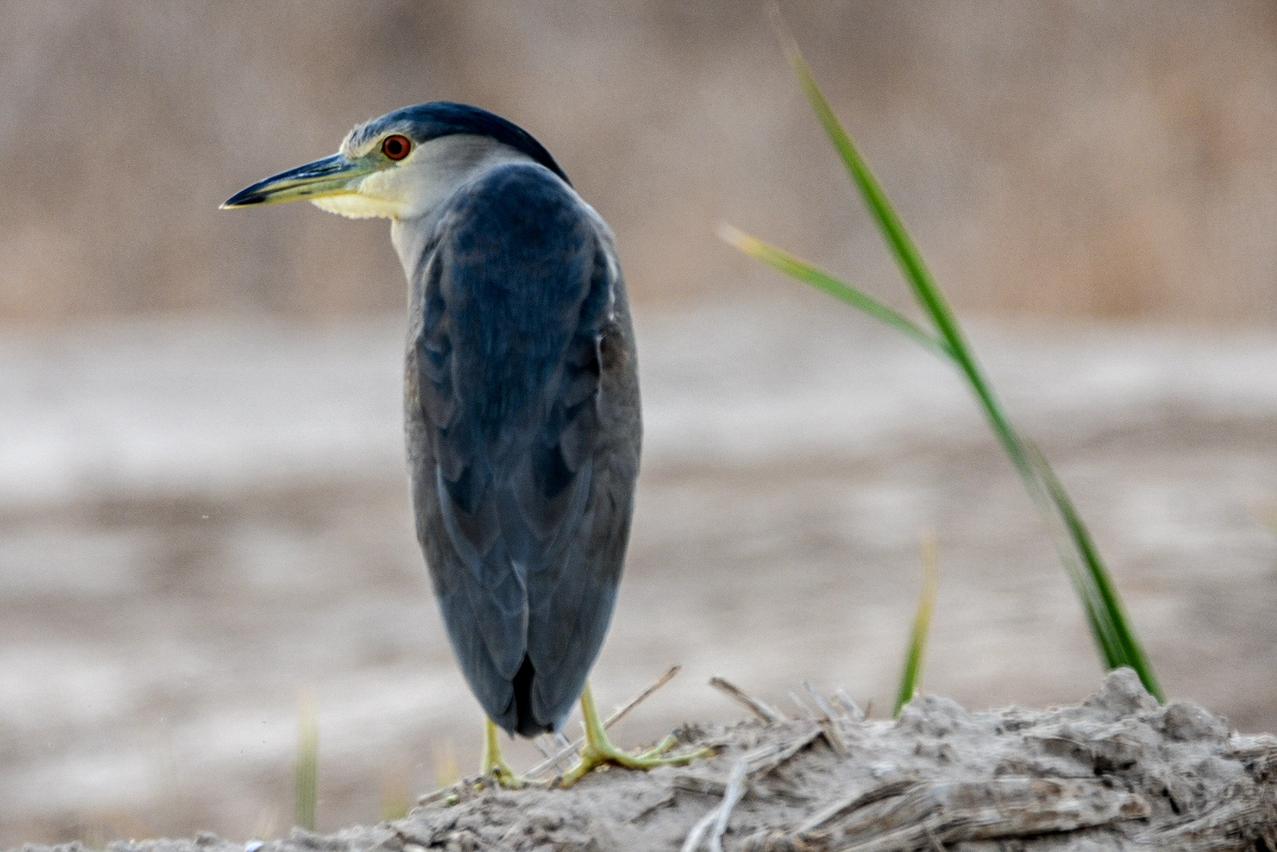 Sonny Bono Salton Sea National Wildlife Refuge