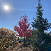 L'automne en beauté