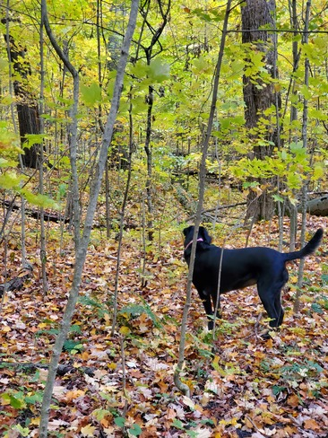 dog walk in the forest Kitchener, ON
