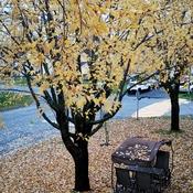 De belles feuilles mortes.