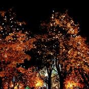 Soirée d' automne.