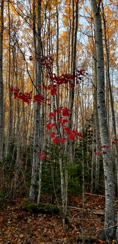 Fall The Glades, NB