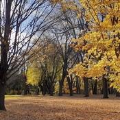 Bel éclairage d'automne!