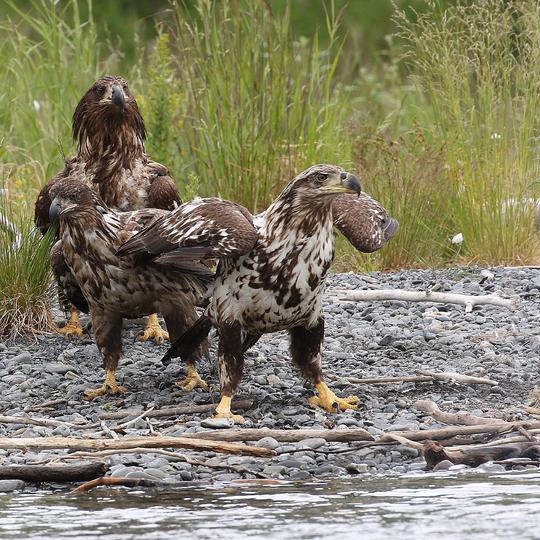 Kenai National Wildlife Refuge
