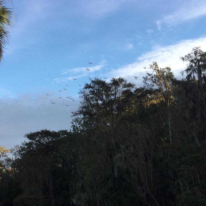 Birds in Flight Over the Spring
