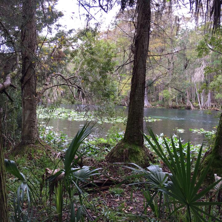 Peeking at the Silver River