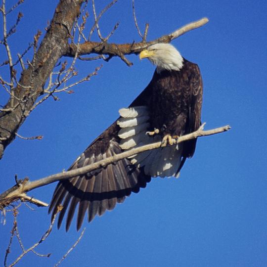 Kootenai National Wildlife Refuge Idaho