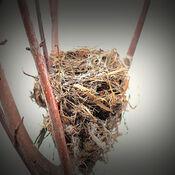 Un nid