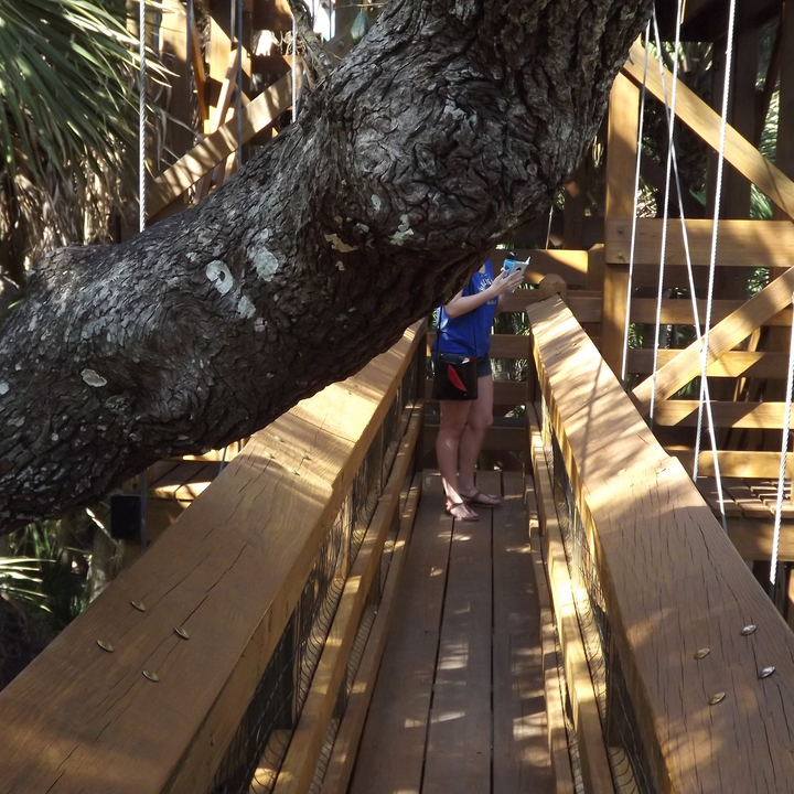 Footbridge at Myakka River