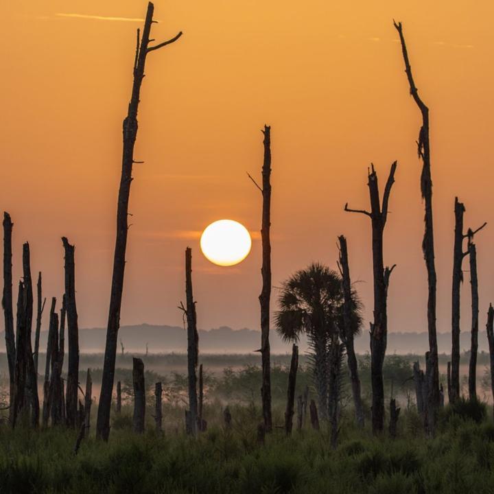 Paynes Prairie Sunrise