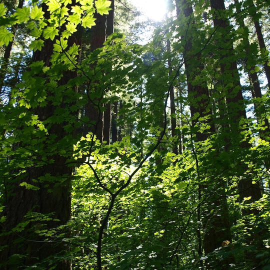 Willamette National Forest