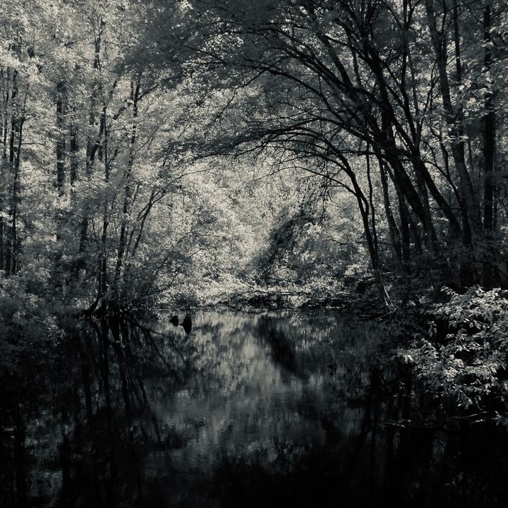 Wakulla Springs Natural