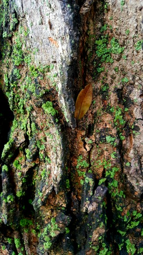 Leaf holding on to fall on tree bark