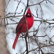M. Cardinal