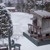Nichoir d'oiseaux en hiver