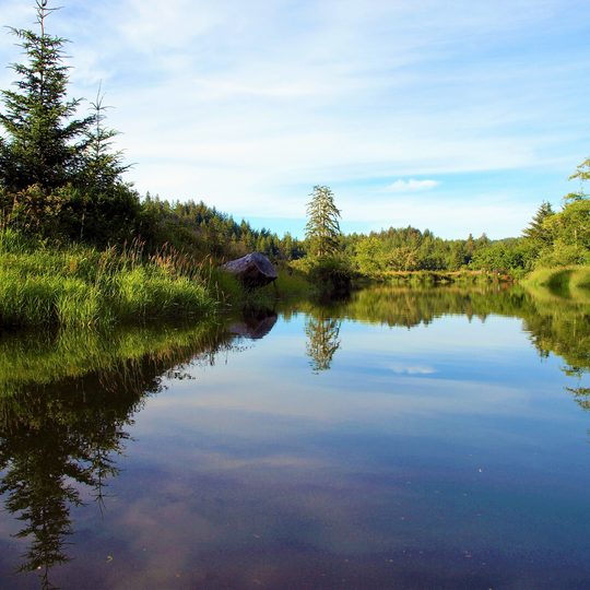Siuslaw National Forest