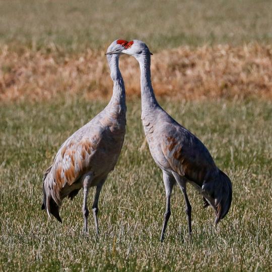 Valle de Oro National Wildlife Refuge