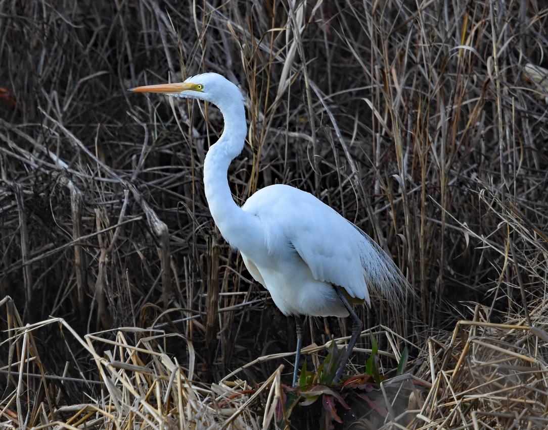 Bombay Hook National Wildlife Refuge