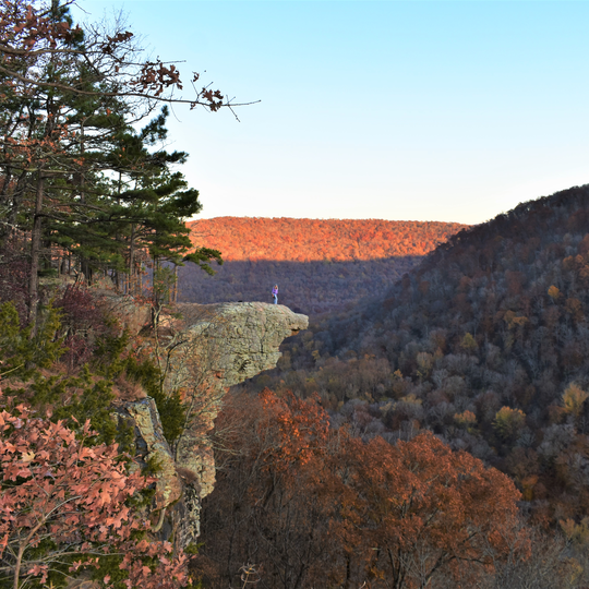 Ozark–St. Francis National Forest