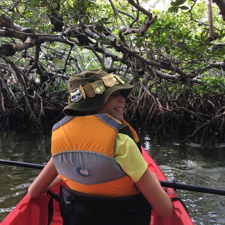 Mangrove Mystery