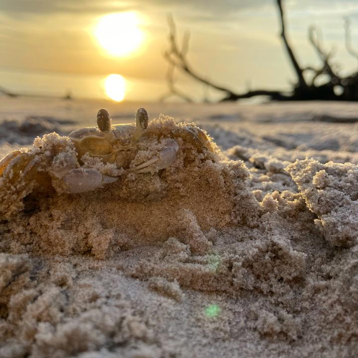 Sunrise crab