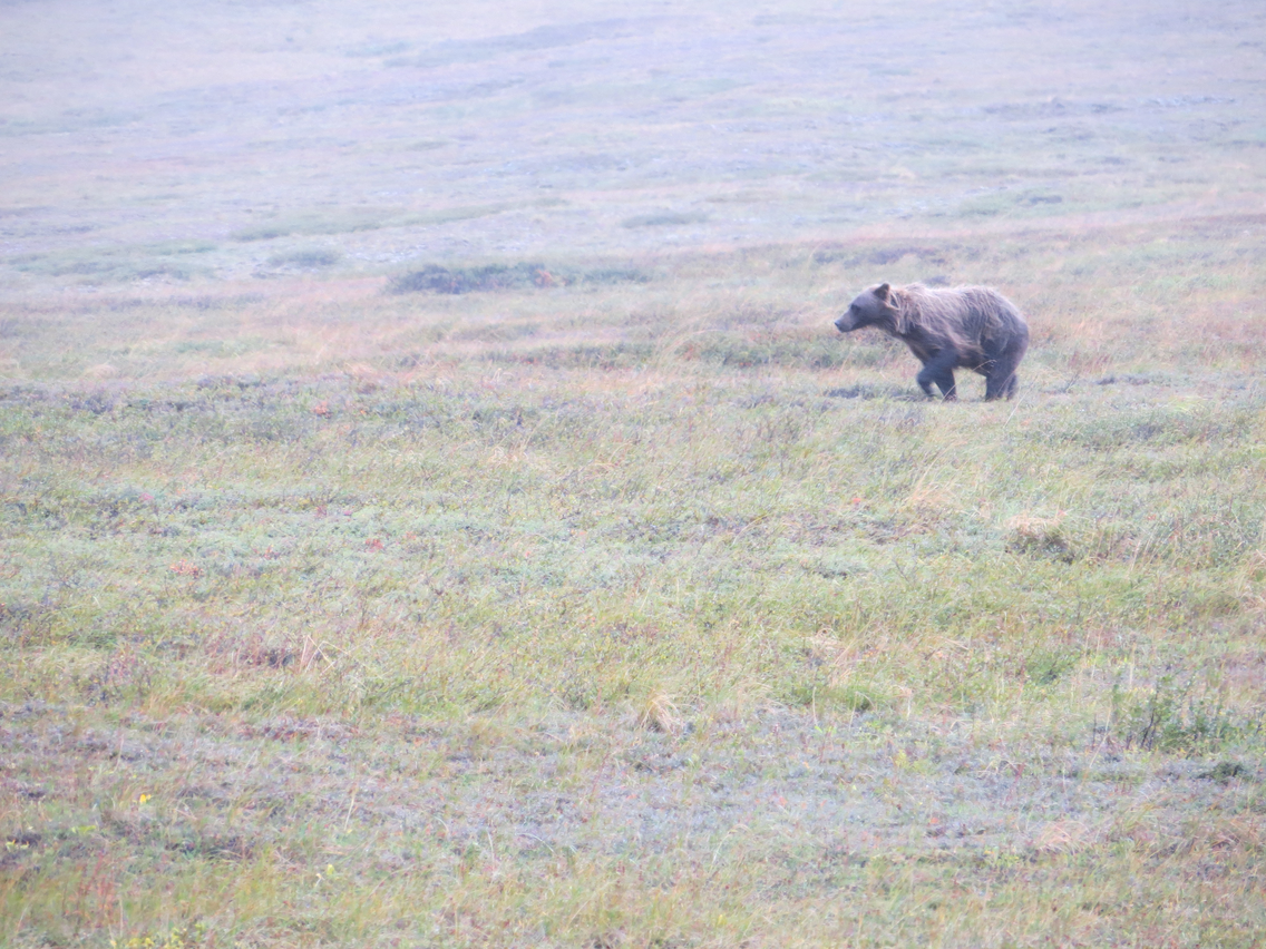 Denali National Park and Preserve