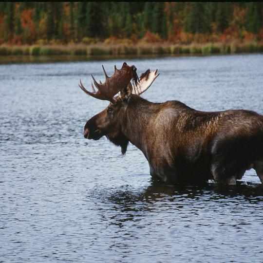 Gulkana Wild and Scenic River