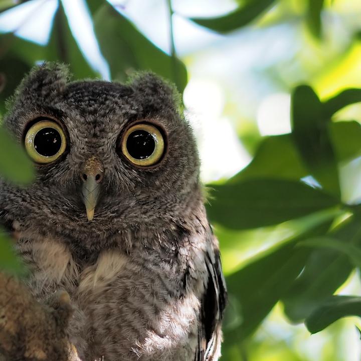 Owlie McOwlface