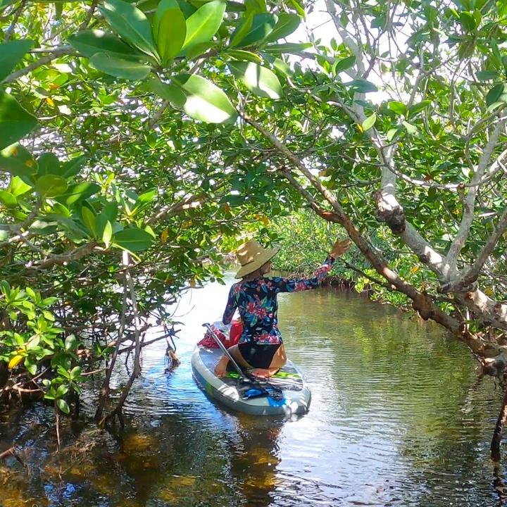 Mangrove Trail at Pennekamp