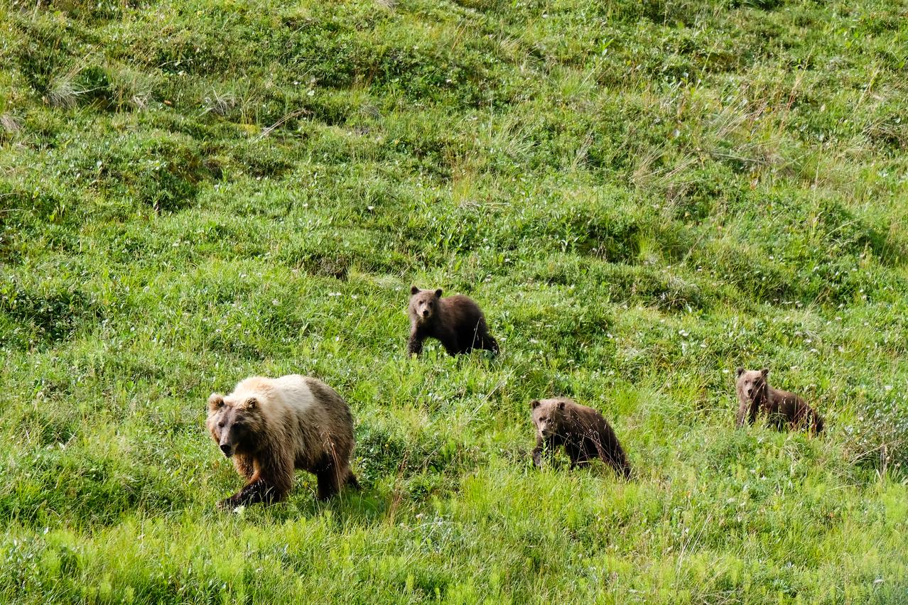 Denali National Park and Reserve