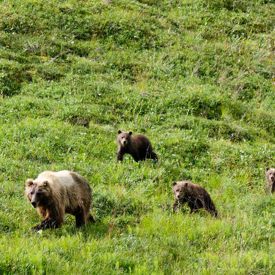 Denali National Park and Reserve