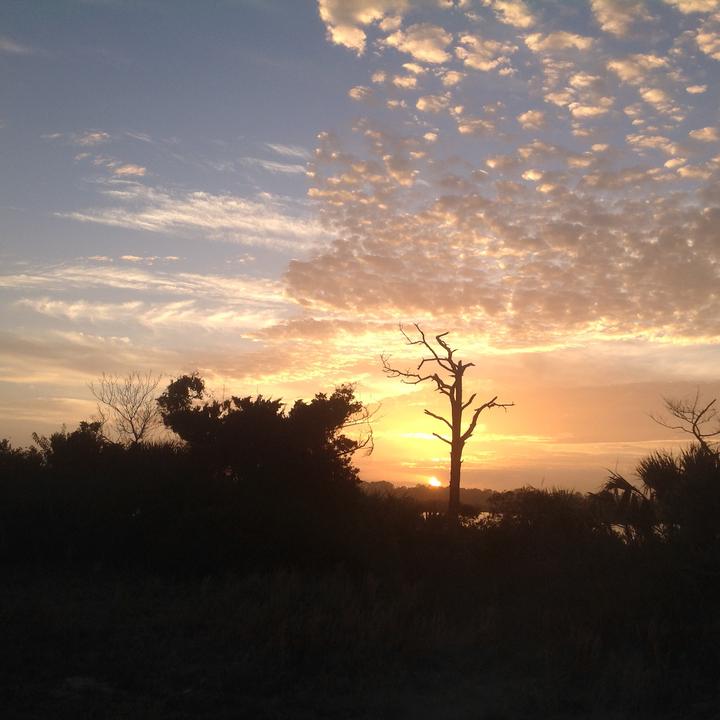 Sunset framing this beautiful tree