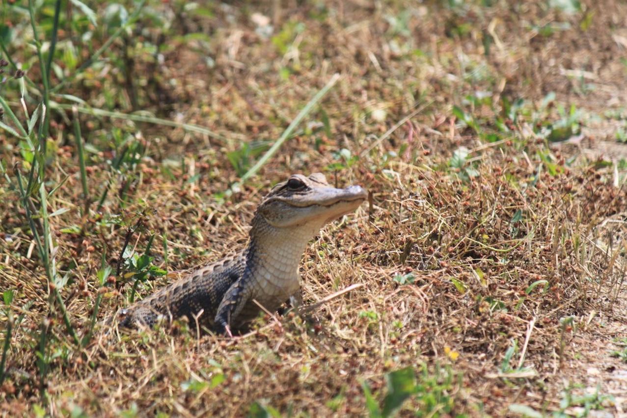 Eufaula National Wildlife Refuge