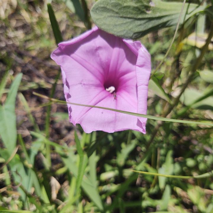 Purple Snack