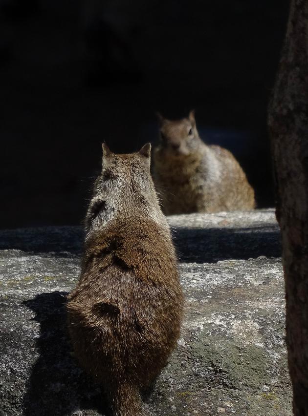 Yosemite Valley National Park