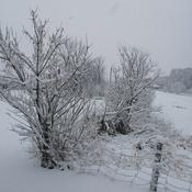 amas de neige sur les branches